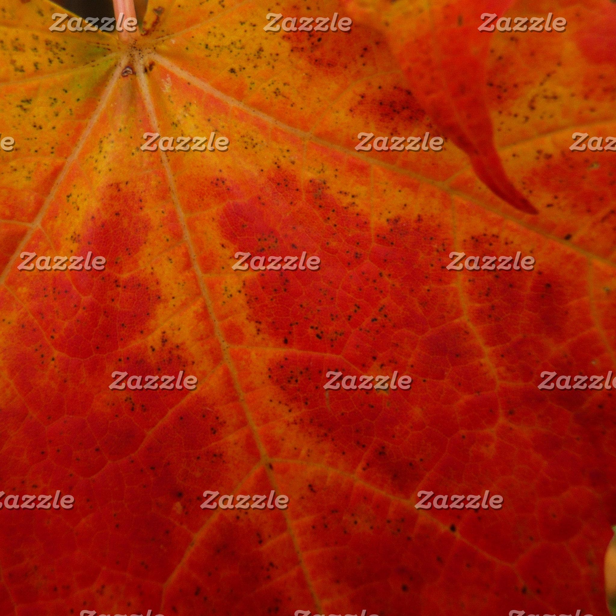 Fall / Autumn