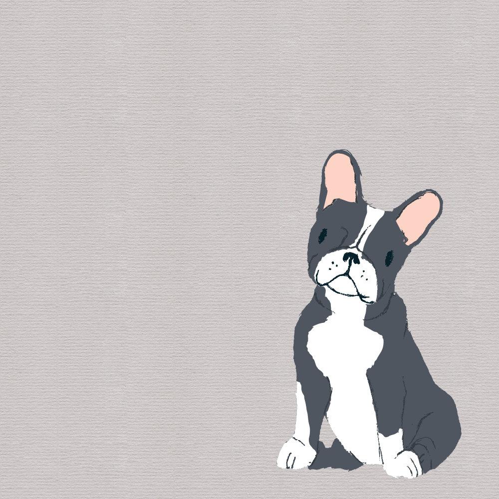 Boston Terrier Drawing
