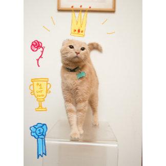 #1 Cat