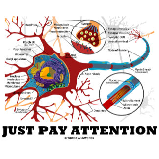 A Matter Of Attention (Neuron / Synapse)