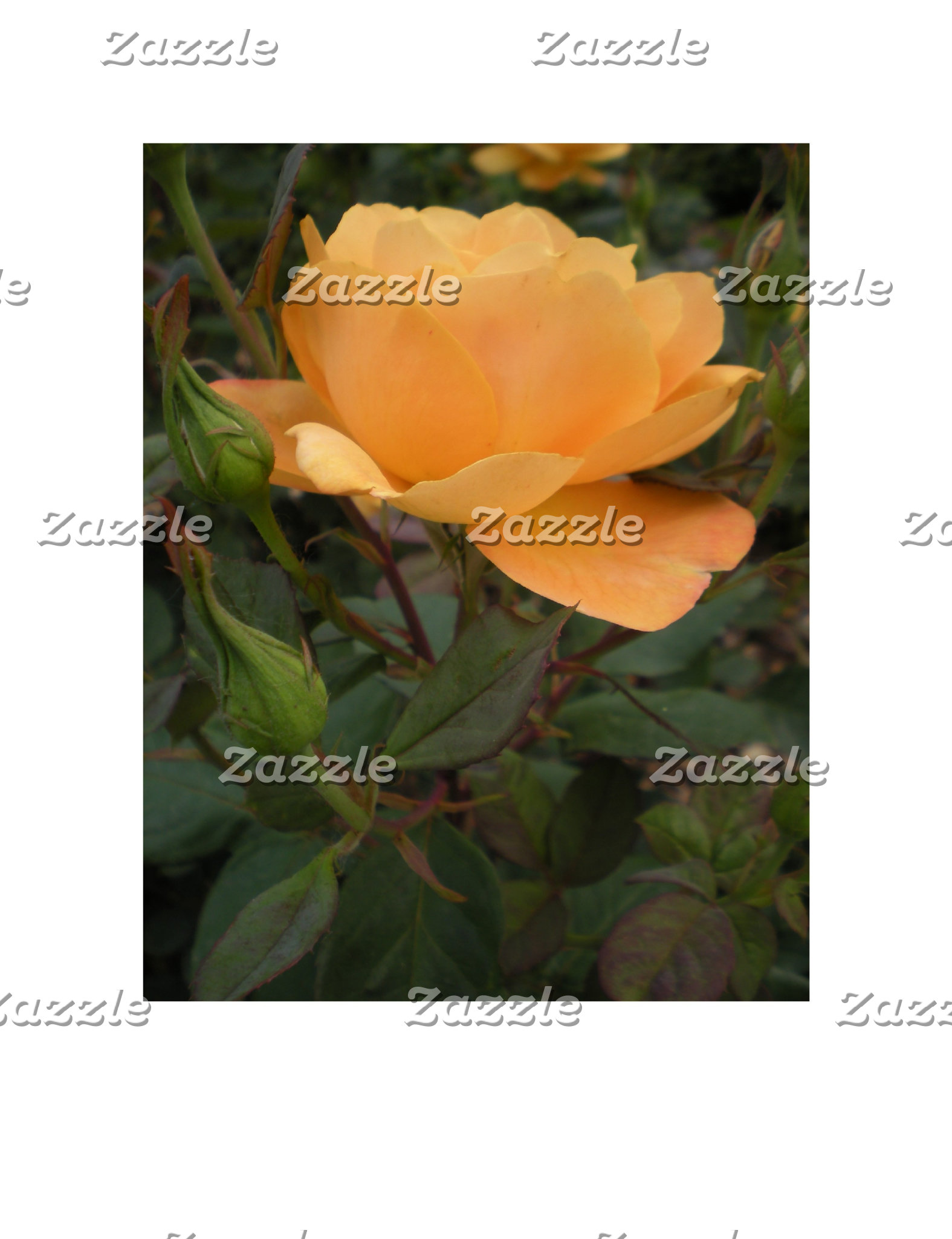 Orange Rose Designs