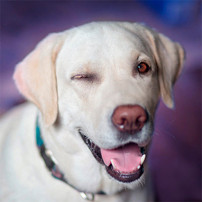 blinking dog