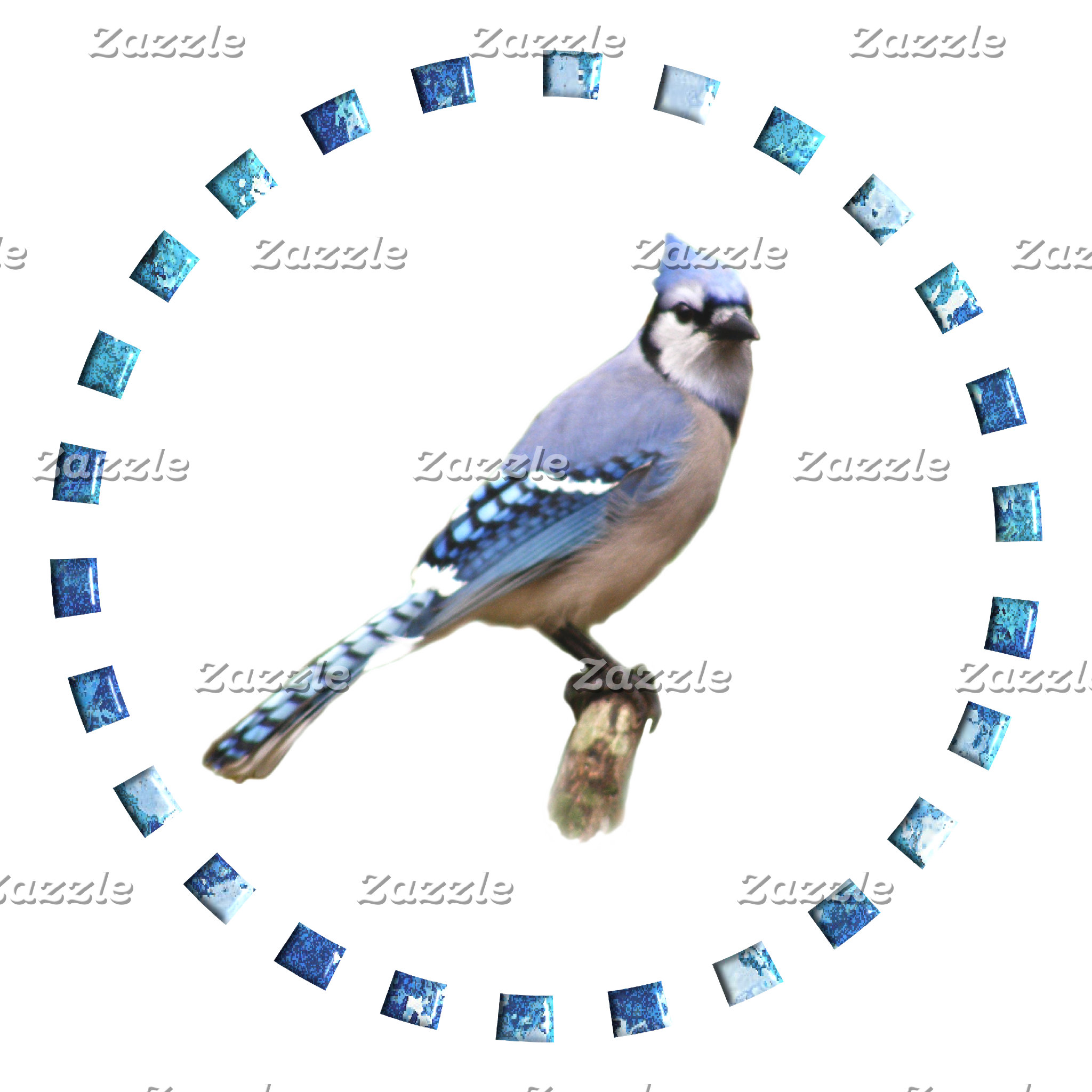 Blue Jay in Circle