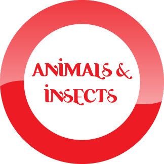 animals/insects.