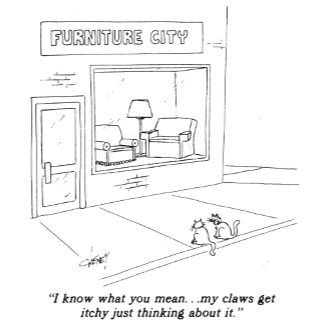 Cats Clawing Furniture