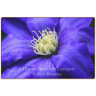 A Flower Does Not Compete Wildflower