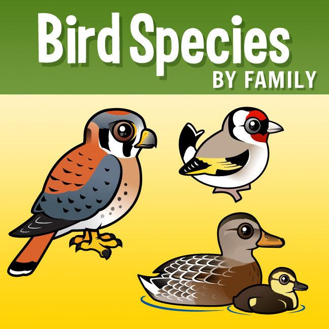 Birdorable Birds