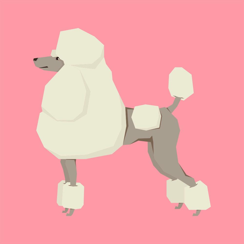 Poodle Illustration