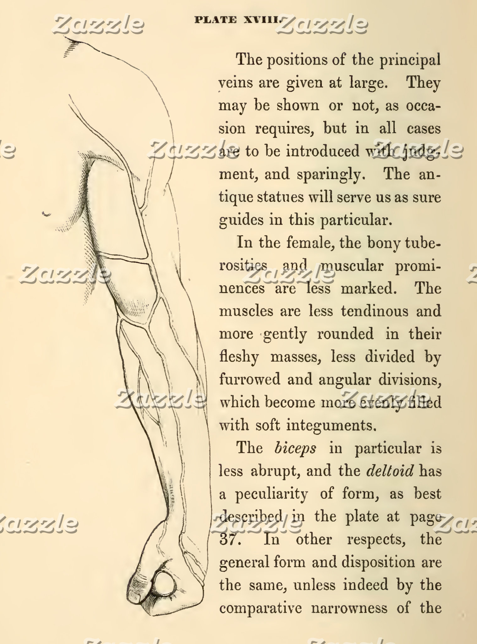 Vintage Anatomy | Veins of the Arm