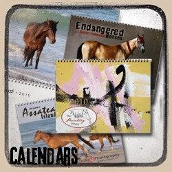 Painting Pony Calendars