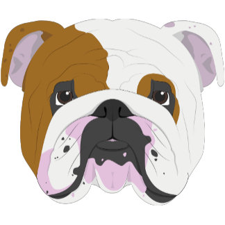 English Bulldog Dog Portrait