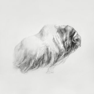 Pencil Drawings of Animals