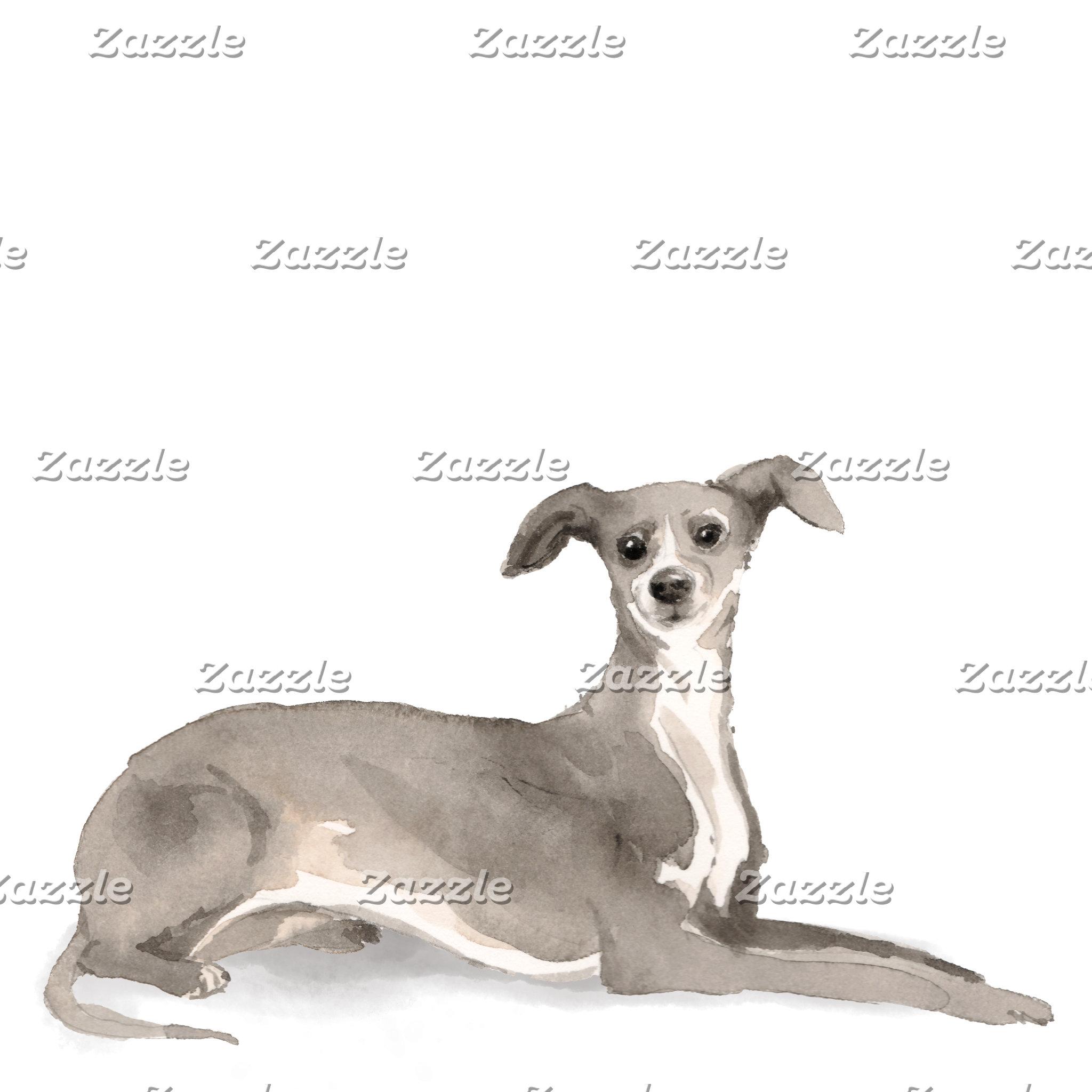 Italian Greyhound Illustration
