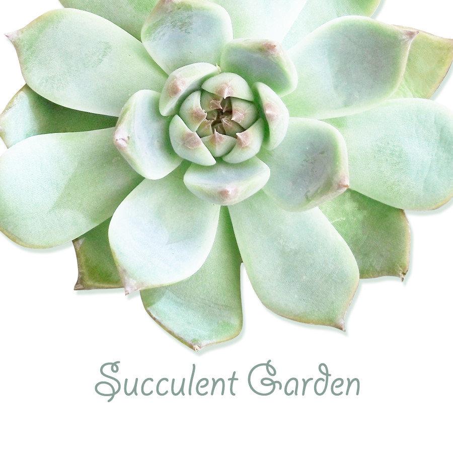 ♥ Succulent Garden
