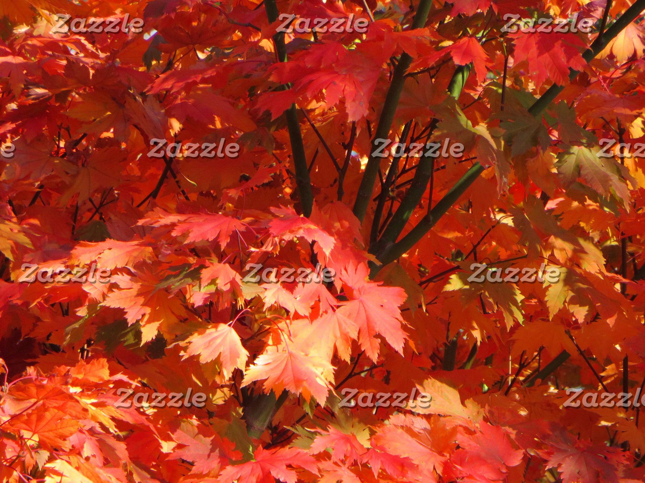 Canberra: Autumn