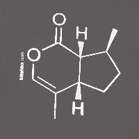 Catnip Molecule (Nepetalactone)