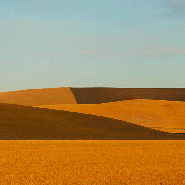 Golden Wheat Fields in Palouse Region
