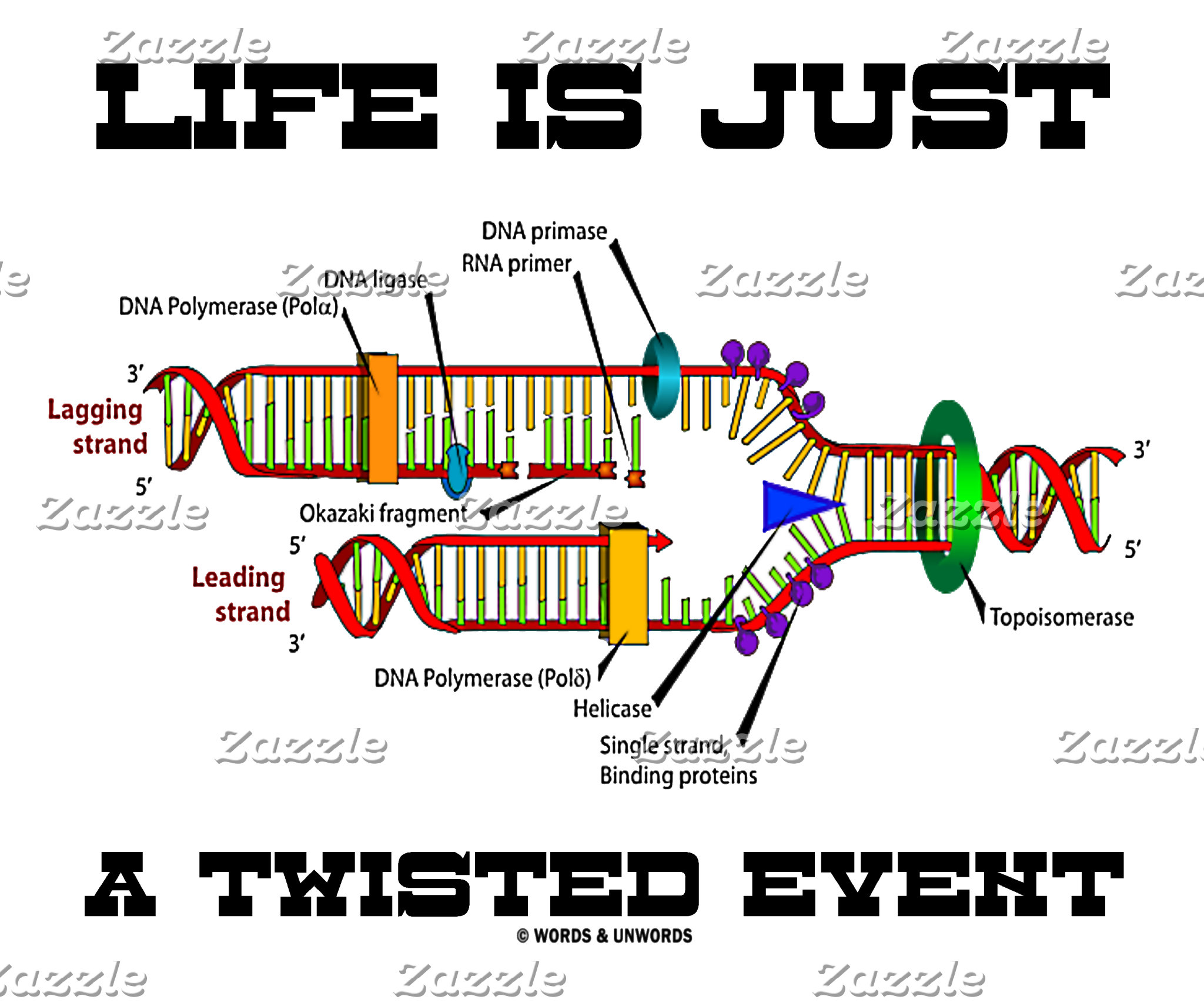 DNA Replication (Genes / Molecular Biology Humor)