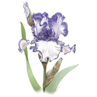 Irises