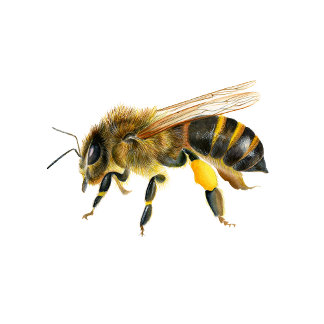 Honey Bee Watercolour Artwork