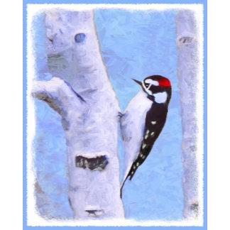Downy Woodpecker