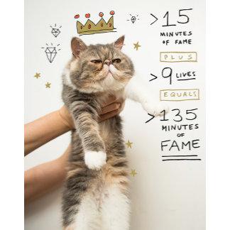 Internet Cat Celeberity