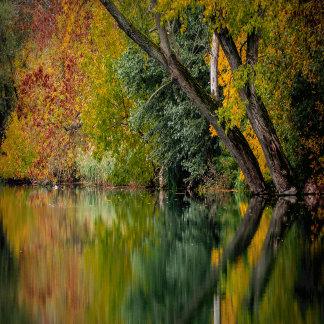 Autumn Riverbank
