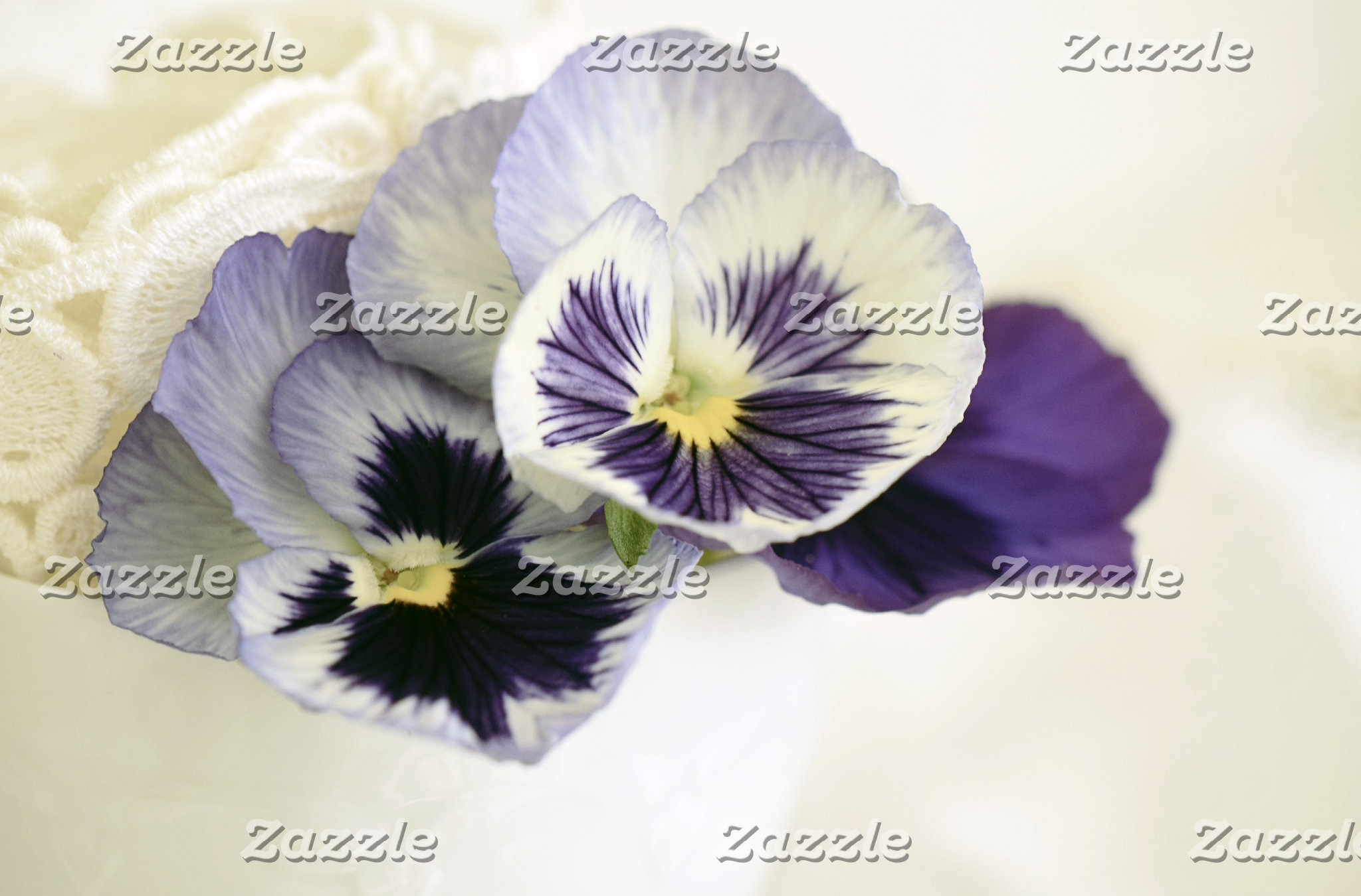 Purple Mauve Pansies