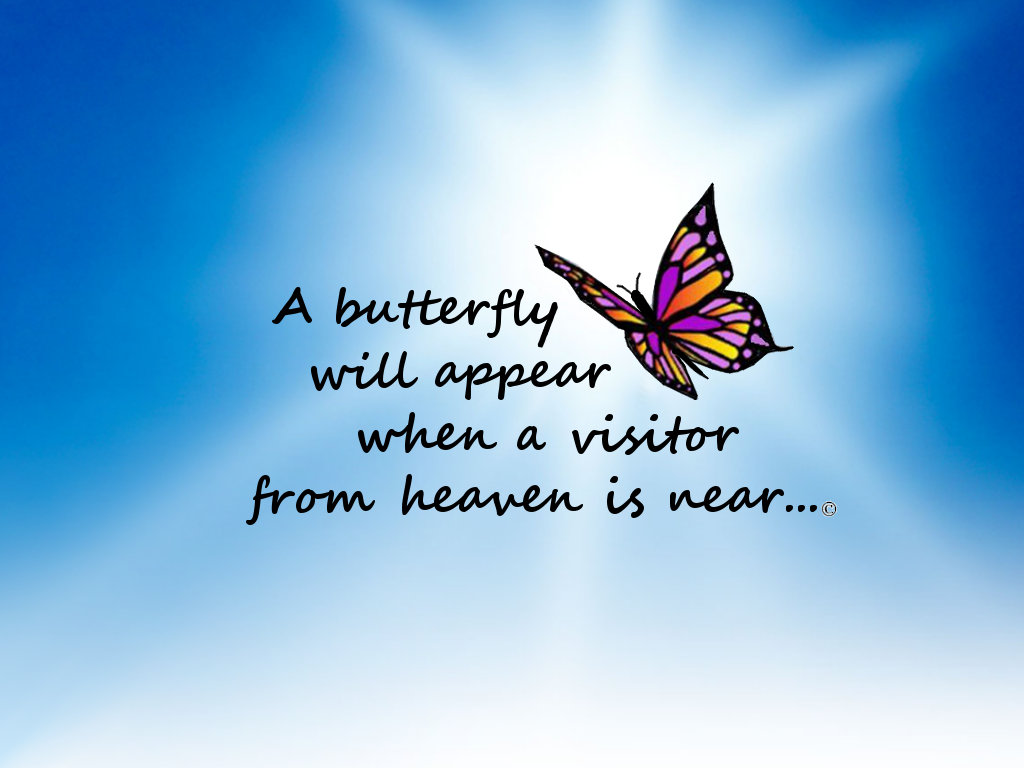 Butterfly, Visitor from Heaven