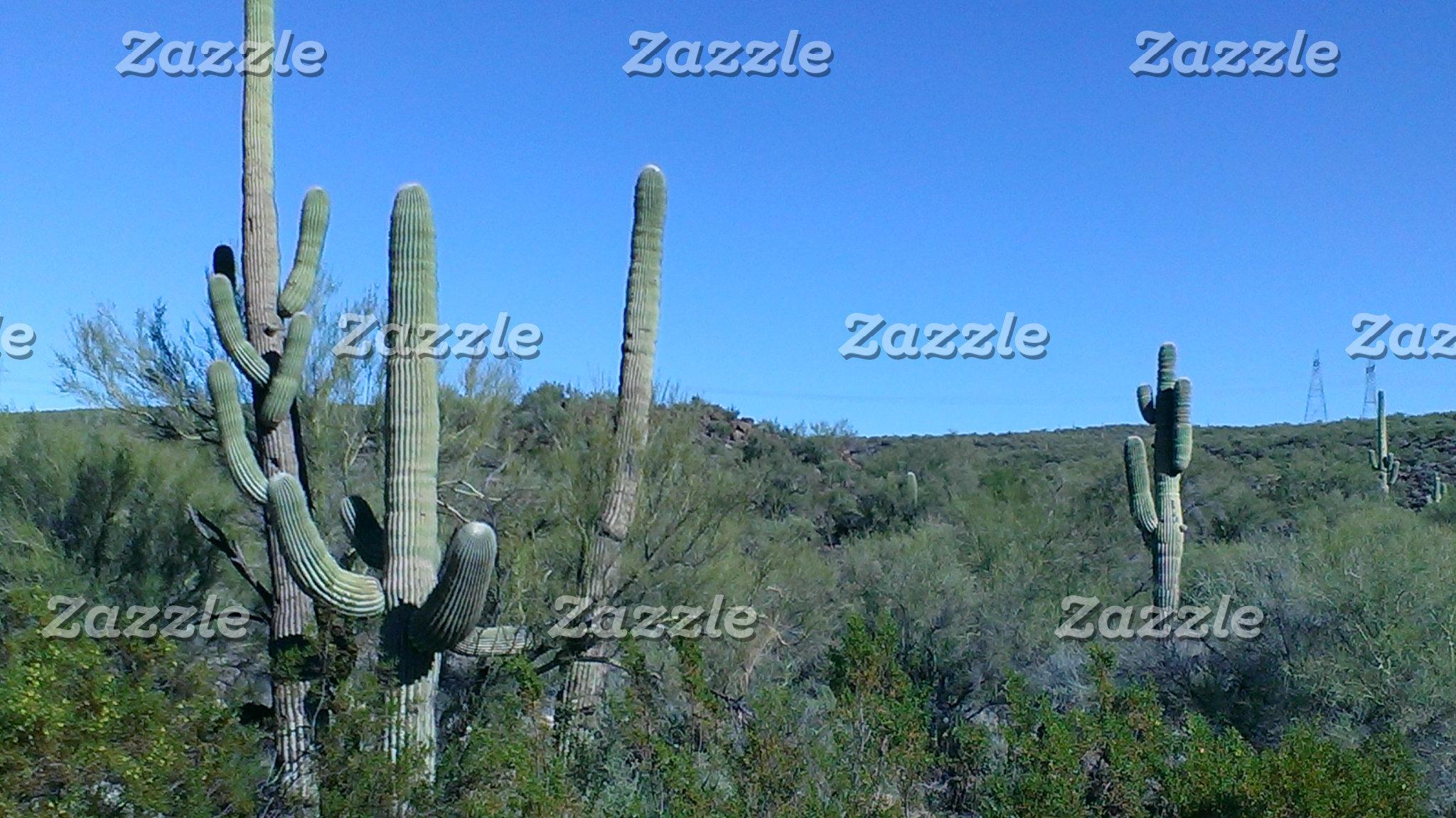 Creative Cacti