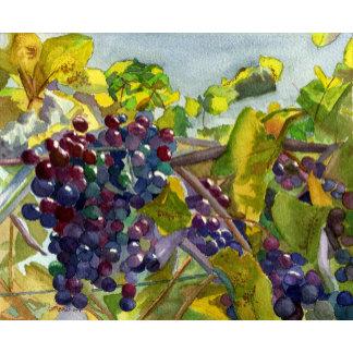 Grapevines