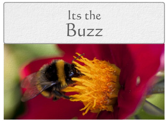 Its the Buzz