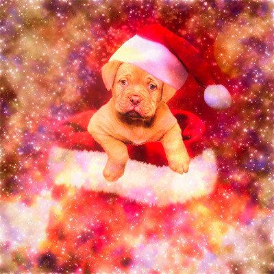 PUPPIE LABRADOR CHRISTMAS