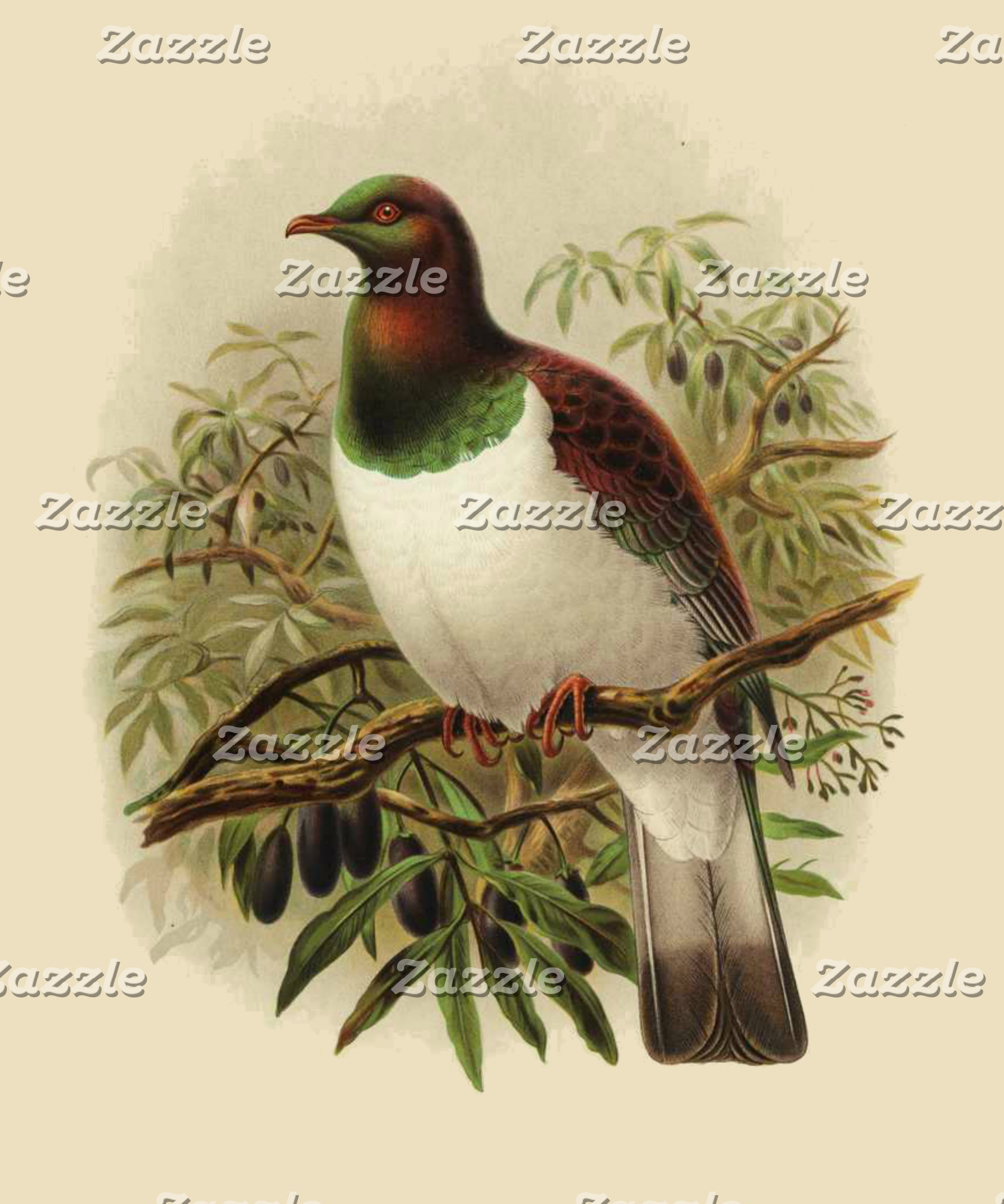 NZ Birds