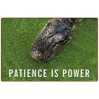 Patience is Power • Florida Alligator