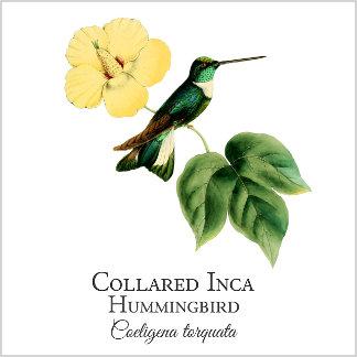 Collared Inca