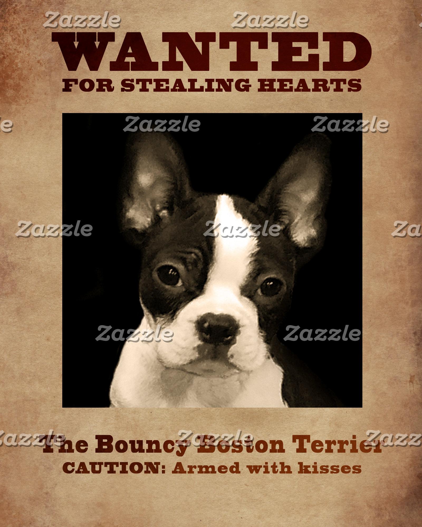 The Bouncy Boston Terrier