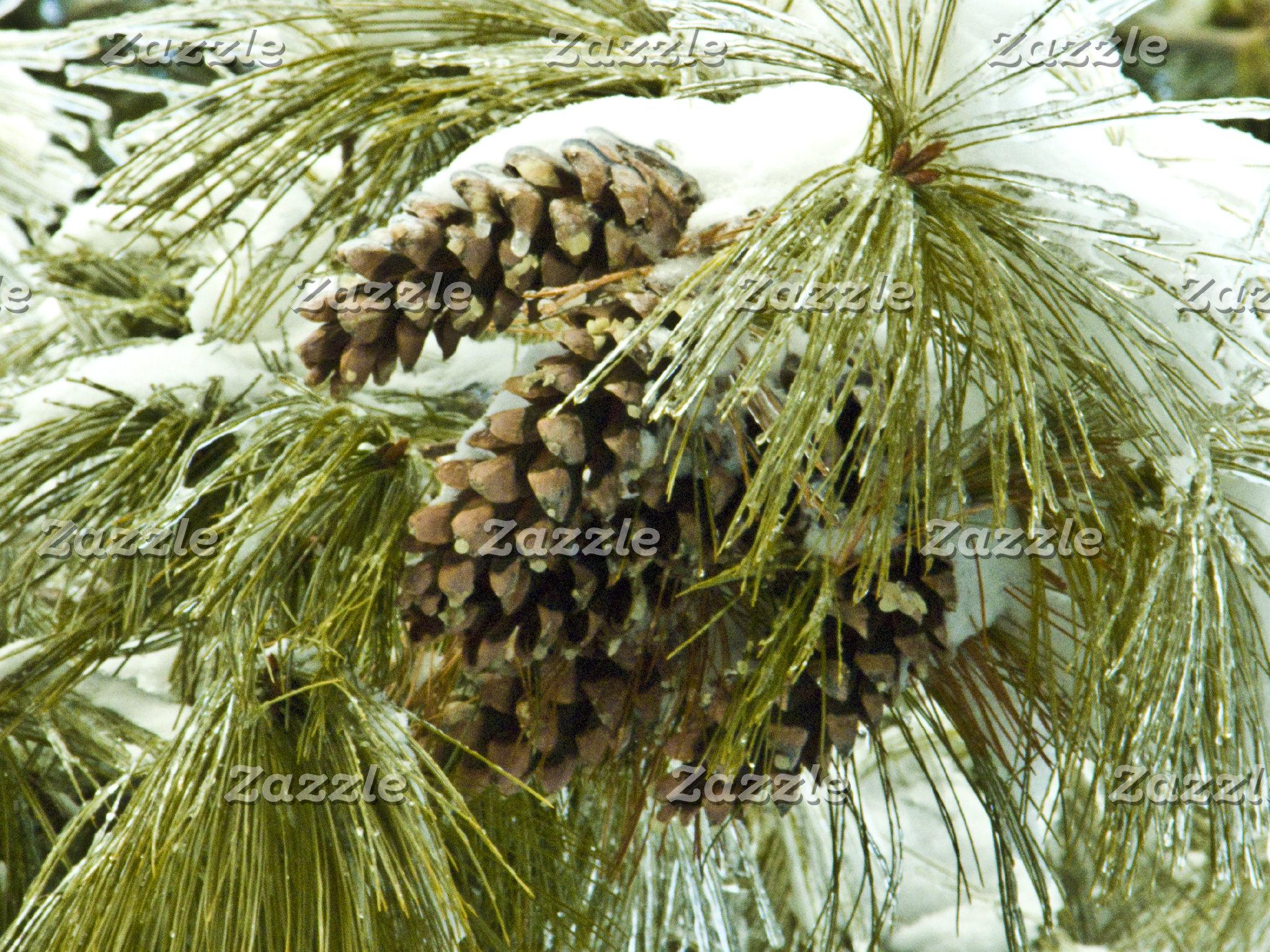 Pinecones in Snow