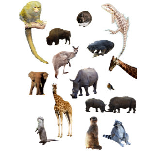 Animals, Wildlife, Meerkats, Horses, Giraffe,Otter