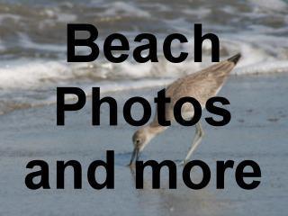 Beach Photographs, beach pictures, beach designs