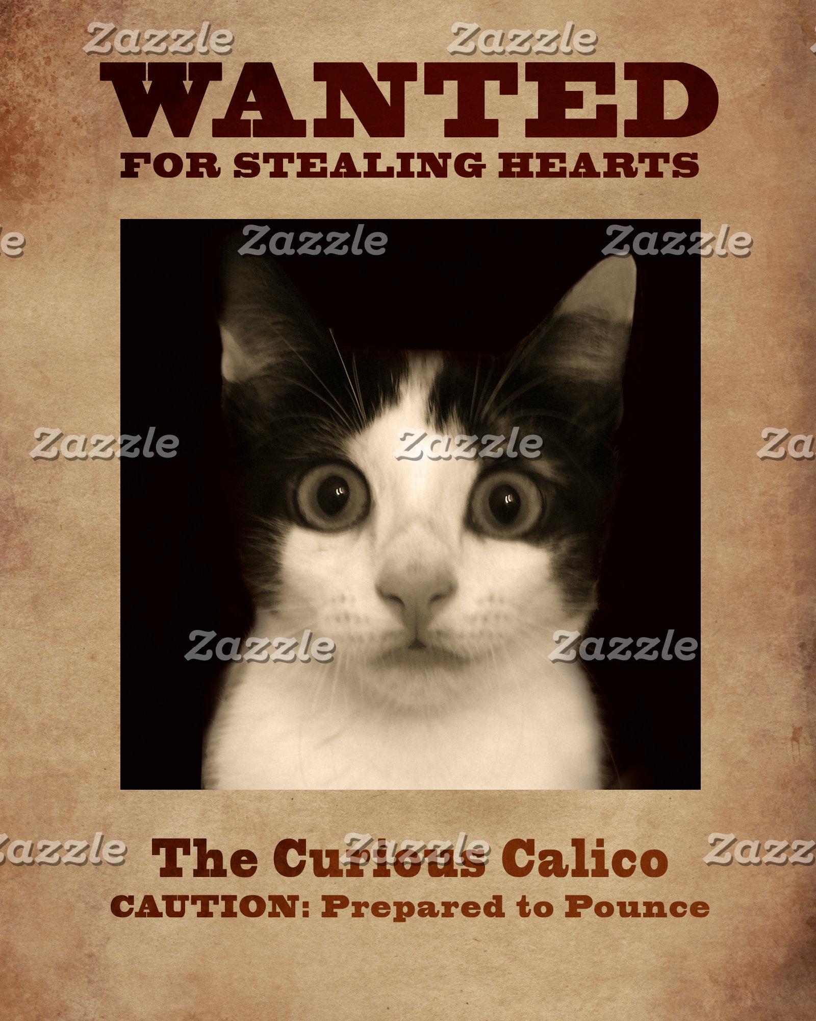 The Curious Calico