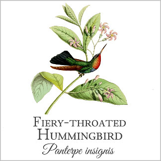 Fiery-throated