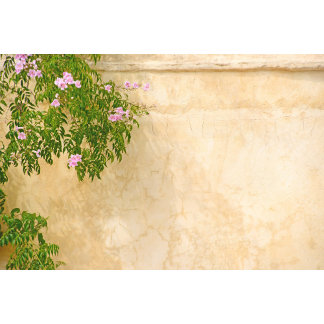 Pink roses on a rustic wall