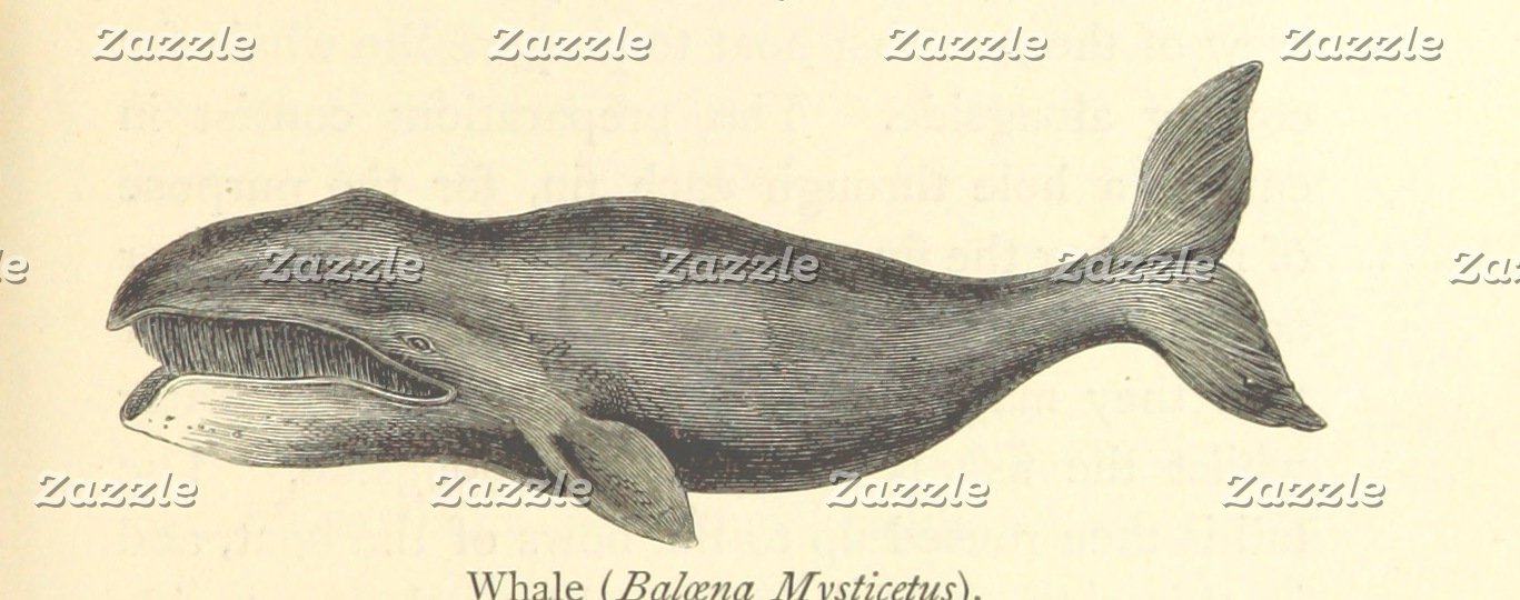 Vintage Toothy Whale