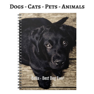 Animals | Dogs | Cats | Pets