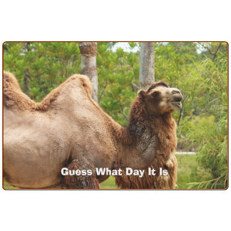 Guess What Day It Is Camel Funny Quote