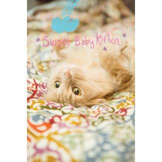 Sweet Baby Cat