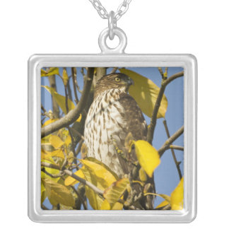 Swainson's hawk at Lan Su Chinese Garden 2 Square Pendant Necklace