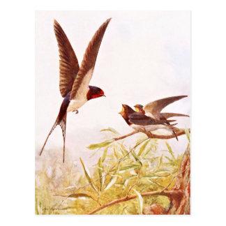 Swallow Bird Illustration Postcard