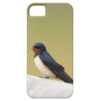 Swallow on a Wooden Ledge Barely There iPhone 5 Case